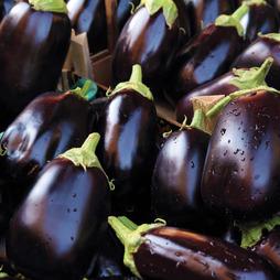 Aubergine 'Bonica' F1 Hybrid - RHS endorsed vegetable seeds