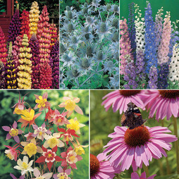 Tall Perennial Mix