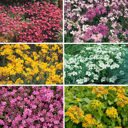 Ground Cover Collection