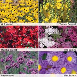 Perennial Colour Collection