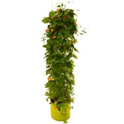VegTrug™ Patio Planter