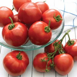 Tomato 'Cristal' F1 Hybrid - RHS endorsed vegetable seeds