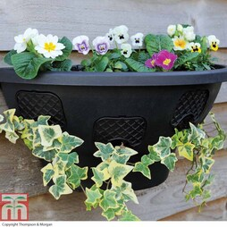 Easy Fill Hanging Wall Planter