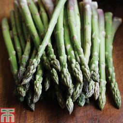 Asparagus officinalis 'Ariane' (Spring/Autumn Planting)