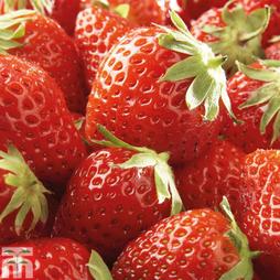 Strawberry 'Mara des Bois'