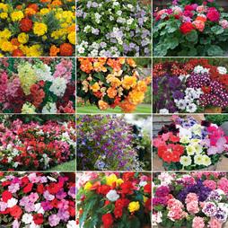 Best Value Bumper Garden Ready Collection