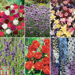 Best Selling Perennial Collection