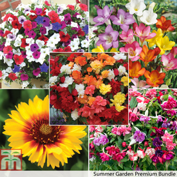 Summer Garden Plant & Bulb Bundle