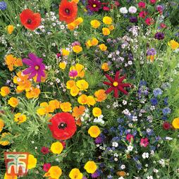 Wildflower Mixture