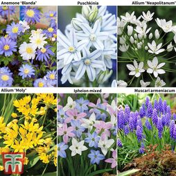 400 Spring Flowering Bulb Collection