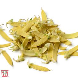 Pea 'Golden Sweet' (Mangetout)