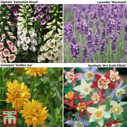 Perfect for Pollinators Perennial Pack