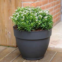 Ninfea Water Resevoir Planter 30cm Pot - Anthricite