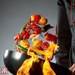 Chilli Pepper 'Tropical Heat' (Atomic)