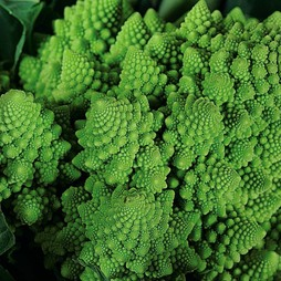 Broccoli 'Romanesco'