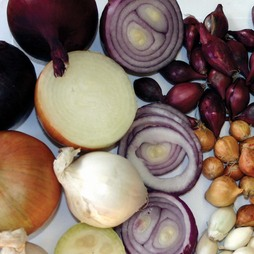Onion Mixed Red,White & Brown (Spring/Autumn Planting)