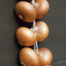 Onion 'Stuttgarter Giant' (Spring Planting)