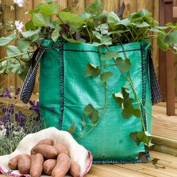 Vegetable Patio Bags