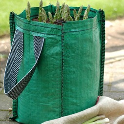 Asparagus officinalis 'Planter Collection' (Spring/Autumn Planting)