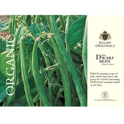 Dwarf Bean 'Maxi' - Duchy Originals Organic Seeds