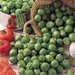 Brussels Sprout 'Bedford Fillbasket'