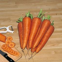Carrot 'Carson' F1 Hybrid