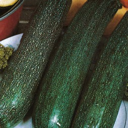 Courgette 'All Green Bush'