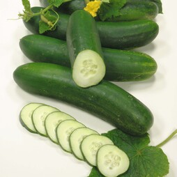 Cucumber 'Swing' F1 Hybrid