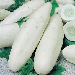 Cucumber 'Long White'