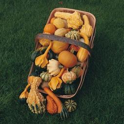 Gourd 'Autumn Glory'