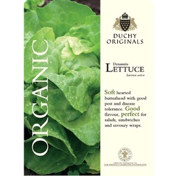 Lettuce 'Dynamite' (Butterhead) - Duchy Originals Organic Seeds