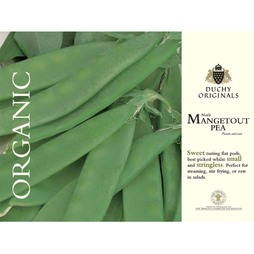 Pea 'Norli' (Mangetout) - Duchy Originals Organic Seeds