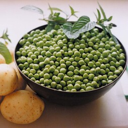Pea 'Celebration' (First Early)