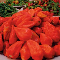 Chilli Pepper 'Naga Jolokia' (Very hot)