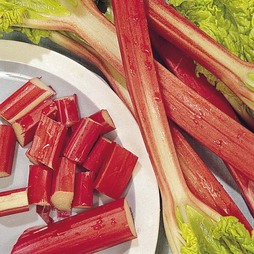 Rhubarb 'Glaskin's Perpetual'