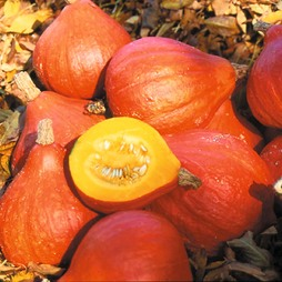 Squash 'Potimarron' (Winter)