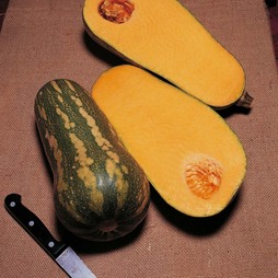Squash 'Barbara Butternut' F1 Hybrid (Winter)