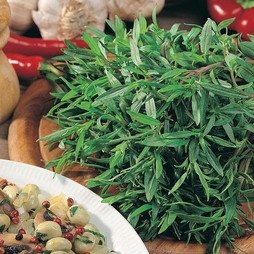 Summer Savory