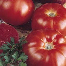 Tomato 'Super Marmande'