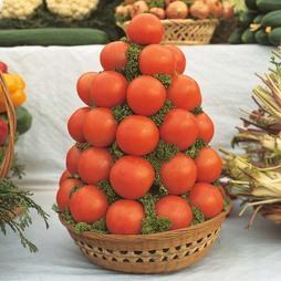Tomato 'Alicante'