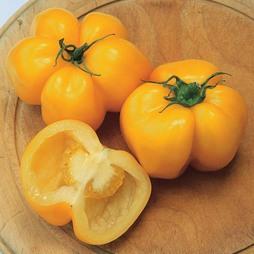 Tomato 'Yellow Stuffer' - Heritage