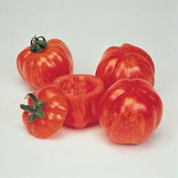 Tomato 'Striped Stuffer' - Heritage