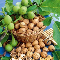 Walnut 'Lara'®