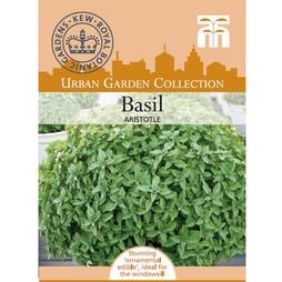 Basil 'Aristotle' - Kew Collection Seeds