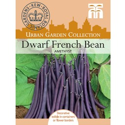 Dwarf Bean 'Amethyst' - Kew Collection Seeds