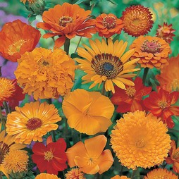 Dream Collection (Orange Flower)