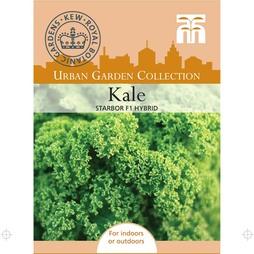 Kale 'Starbor' F1 Hybrid