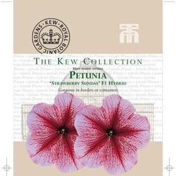 Petunia 'Strawberry Sundae' - Kew Collection Seeds