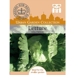 Lettuce 'Hollywood' (Iceberg/Crisphead) - Kew Collection Seeds