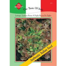 Lettuce 'Rossa a Foglia Riccia da Tavolo' (Loose-Leaf) - Vita Sementi® Italian Seeds